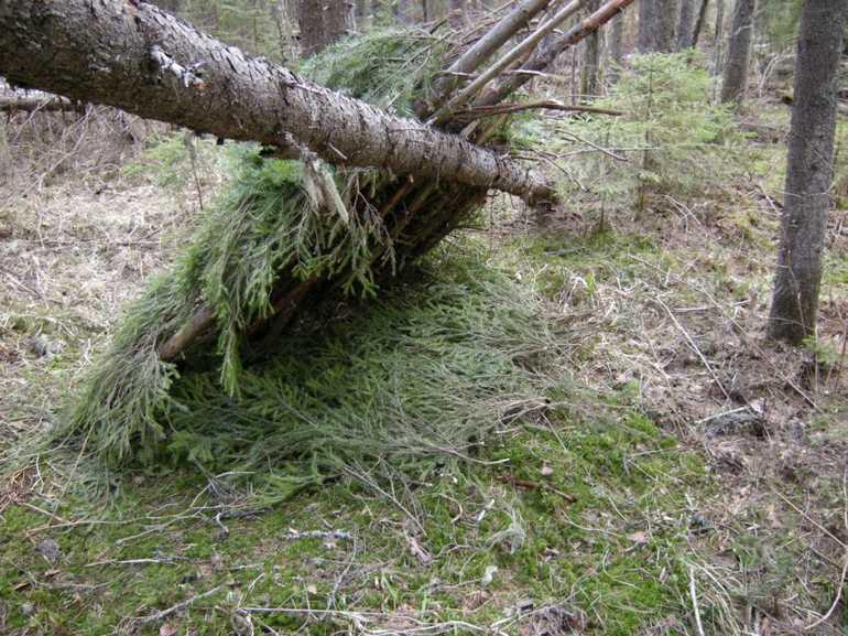 как сделать шалаш из ельника